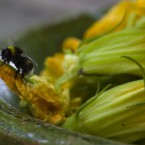 Wordless Wednesday | French Bee in Gascony
